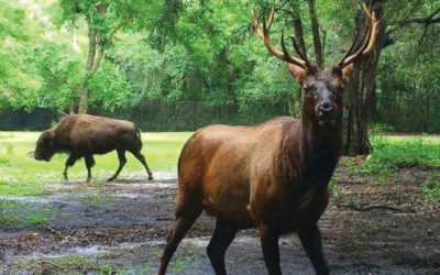 An Elk's Life